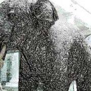 David_Noir_Elephant_petrifie_vignette