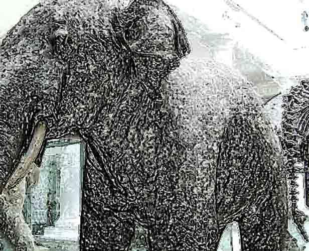 David Noir - Eléphant pétrifié de Roumanie
